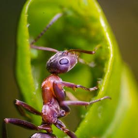 by Andrej Folo - Uncategorized All Uncategorized ( macros, macro photography, green, nature close up, spiral, leaf, close up, macro shot, macro art, macro, nature, legs, nikon, head,  )