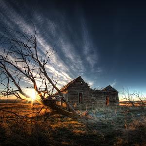 Shake house sunrise branches.jpg