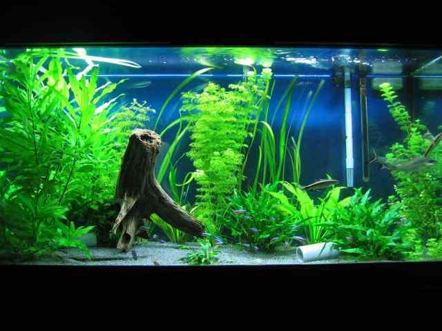 aquarium decoration ideas screenshot - Freshwater Aquarium Design Ideas