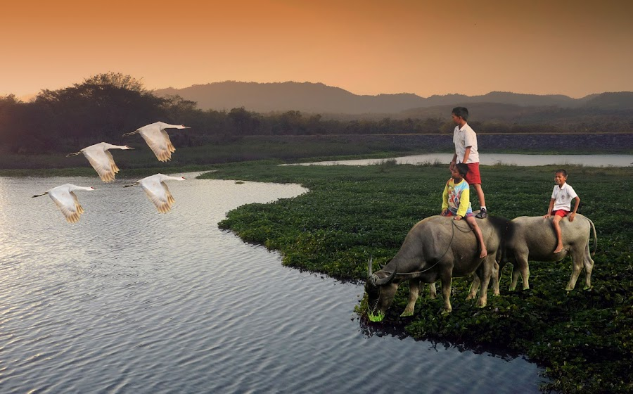 menikmati senja by Haris Fallin - News & Events World Events ( bird, afternoon, senja, danau, cow, lake, kids )