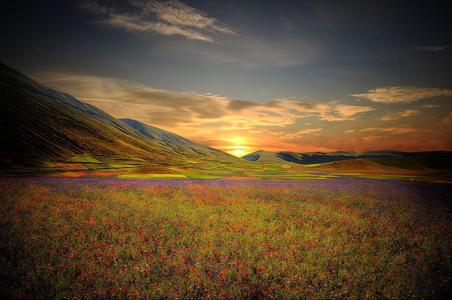 Poppies by Luca Libralato - Landscapes Prairies, Meadows & Fields ( clouds, poppies, norcia, sunrise, castelluccio )