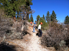 Photo: Fay-Luther/Jobs Peak Ranch Trail Maintenance