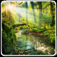 Wild Nature Live Wallpaper