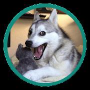 Animolz Stickers for chatting - Animals sticker
