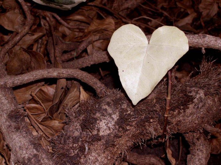 L' Amore in natura di velutha