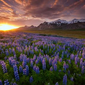 Icelandic sunset by Boris Michaliček - Landscapes Mountains & Hills ( iceland-flowers-mountains-hills-sunset )