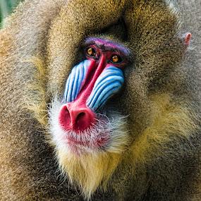by Judy Rosanno - Animals Other Mammals ( new orleans, audubon zoo, louisiana, october 2016,  )