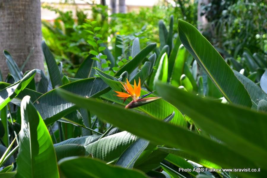 В тропическом саду Тель Авива. Экскурсия.