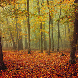 Fall Impressions X. by Zsolt Zsigmond - Landscapes Forests ( foliage, forest, fall, leaves, ladscape, nature, autumn, trees )