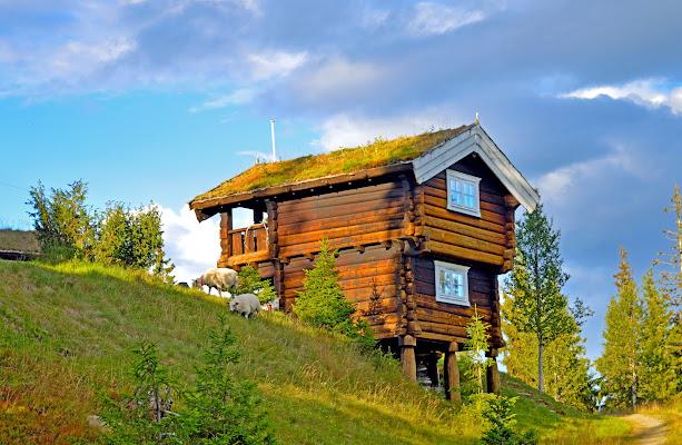 Il legno è casa di stefano_angeli