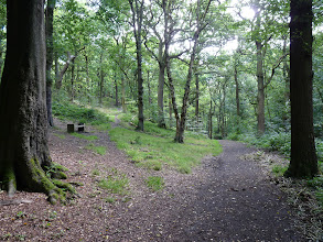 Photo: Path junction above the pond In Northcliffe Wood Shipley