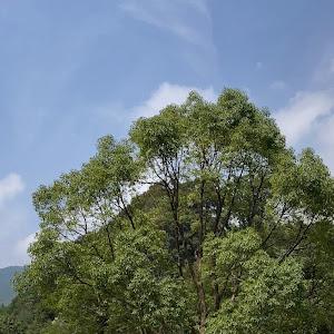 ランドクルーザープラド GDJ151W TZ-G H30のカスタム事例画像 みやっきーさんの2020年08月10日13:22の投稿