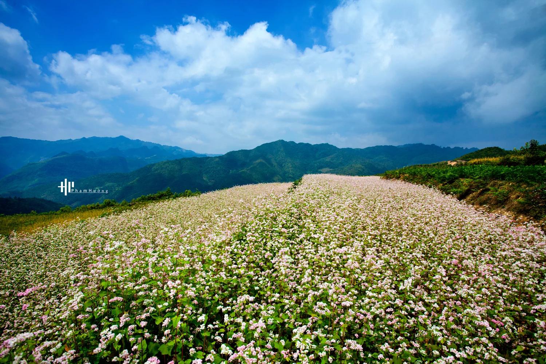 Tháng 11 - tam giác mạch nhuộm hồng xứ Hà Giang - ảnh 7
