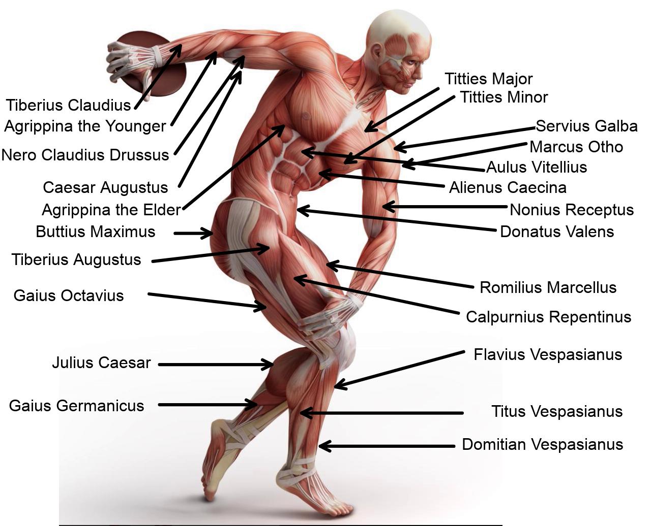 Figure 1. Pre-plie Muscle Man (qumpapilla sinephallus)