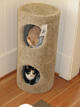 Photo: Checking out the new cat tower.