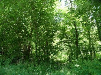 terrain à Monteneuf (56)