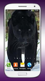 Černý Panter Živé Tapety - náhled