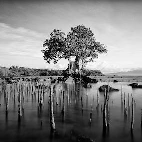Generations by Hiram Abanil - Nature Up Close Trees & Bushes ( growing up, trees, pagbilao )