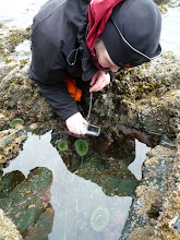 Photo: Niamh at a tide pool.  These are always fascinating places.  Photo by Ben.