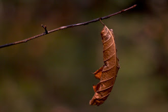 Photo: The Straggler Halfway through the New England winter this little guy's still hanging on.  #365Project curated by +Simon Kitcher