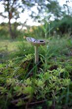 Photo: Mushroom in grass