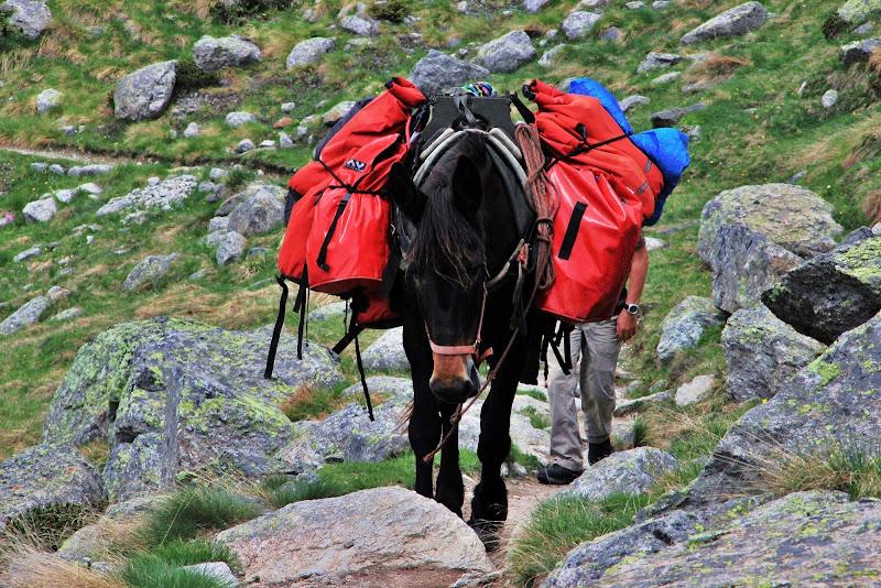 In viaggio con il mulo di ScrofaniRosaria