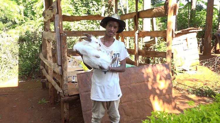 Benjamin Gathii shows off one his 200 rabbits in his farm in Kaharati area, Murang'a county.