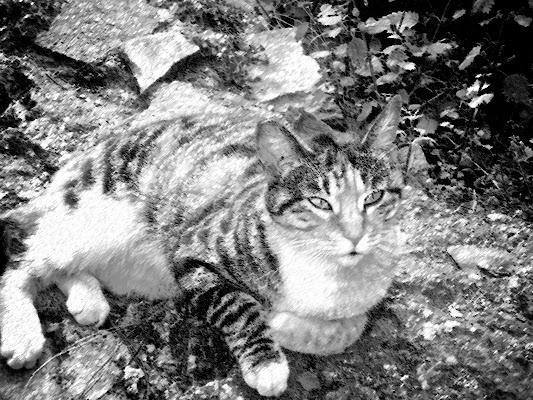 Lo sguardo del gatto di luiker