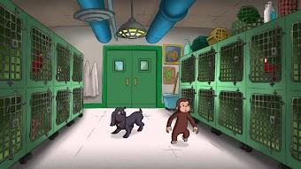 Free Hundley/Bag Monkey