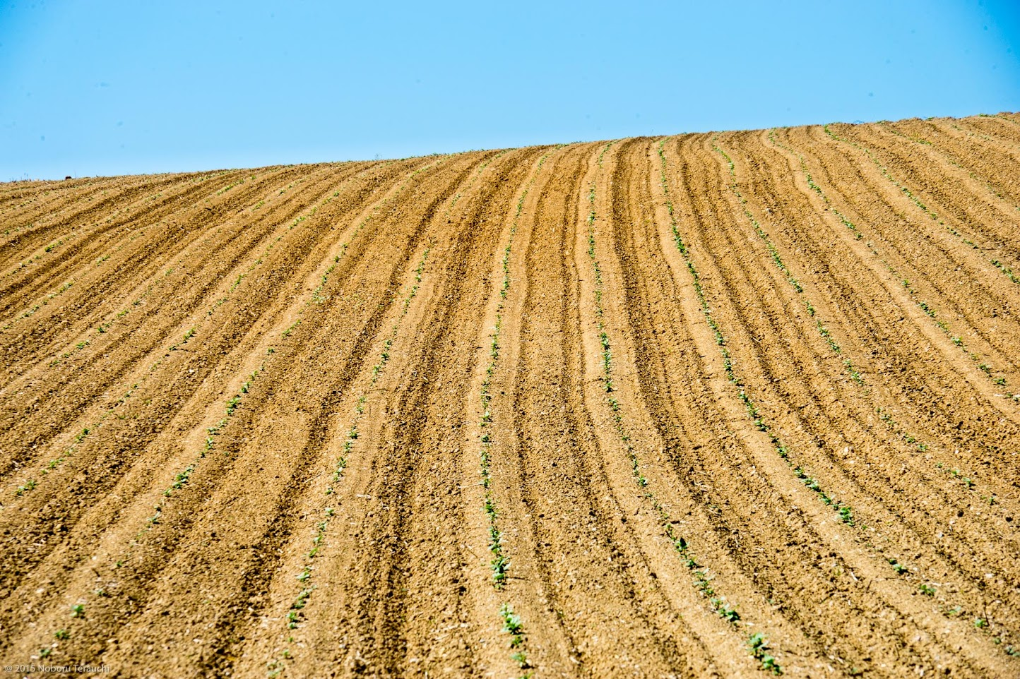 天空に伸びゆく広大なひまわり畑