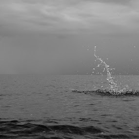 Mermaid Memory by Jay Hathaway - Black & White Landscapes ( horizon, waterdrop, waterscape, black and white, splash, landscape )