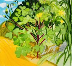 "Photo: Yellow Wood Sorrel Drawing, pencil and acrylic on mylar, 22"" x 24"", 2014"
