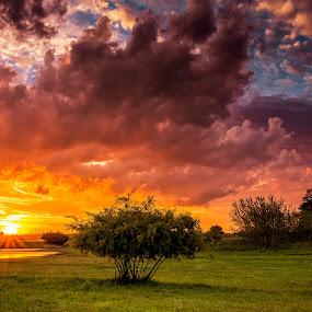 Evening Glow by Hans-Erik Arp - Landscapes Sunsets & Sunrises ( clouds, water, african, color, sunset, sundown, trees, colours )