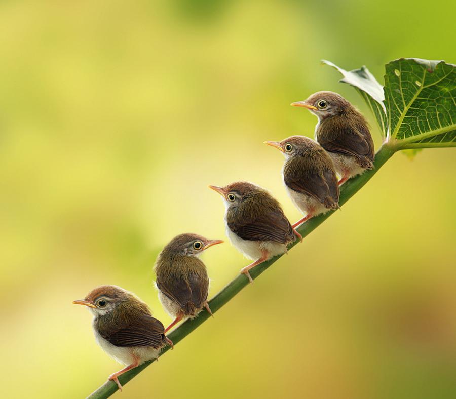 We are waiting mom by Prachit Punyapor - Animals Birds