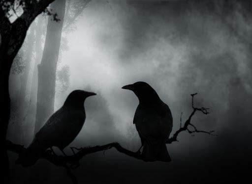 Una pareja de cuervos