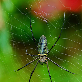 by Yulianto Efendy - Animals Insects & Spiders