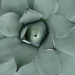by Gene Richardson - Nature Up Close Other plants