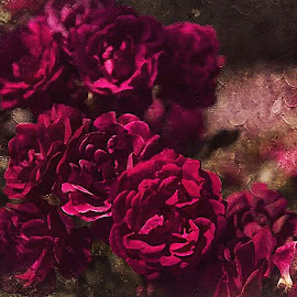 Mama Likes the Roses by Nancy Senchak - Digital Art Things