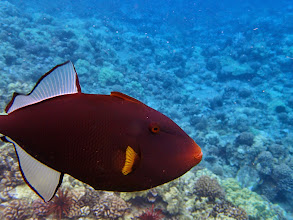 Photo: One of many spectacular fish at the Molokini crater.