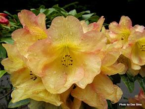Photo: (Year 2) Day 353 -  Lovely Flowers at Umpqua Lighthouse