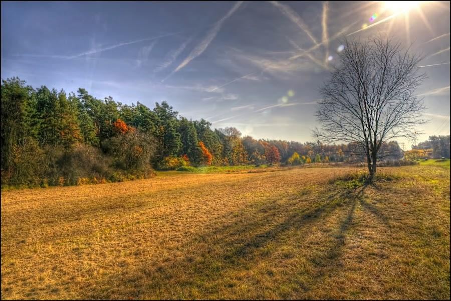 by Jana Vondráčková - Landscapes Prairies, Meadows & Fields