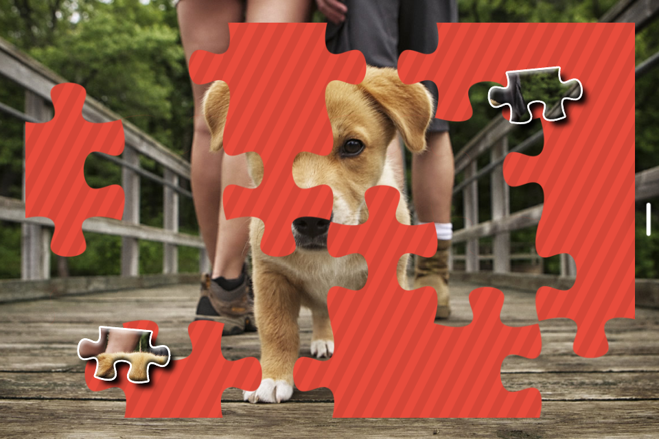 Puppies Jigsaw Puzzle for Kids- screenshot