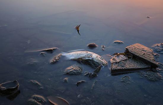 Chuyện cá chết và bài học từ sách Xuất Hành
