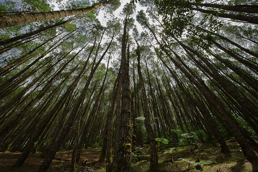 trees by Damare Langit - Nature Up Close Trees & Bushes