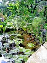 Photo: Don't let them escape into the wild, but goldfish DO keep mosquitoes in cheque. Note the tropical feel this water garden has.