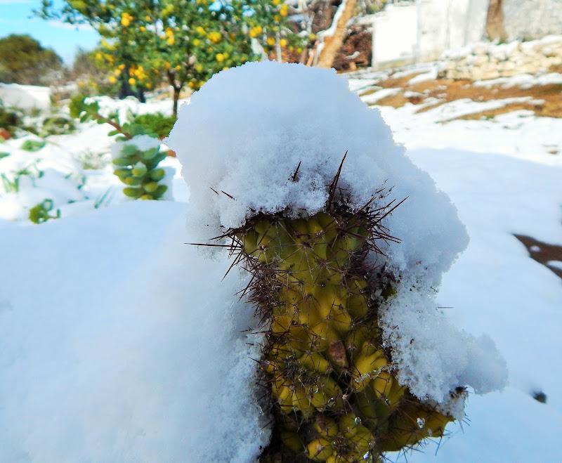 Coperti dalla neve di peppenyc