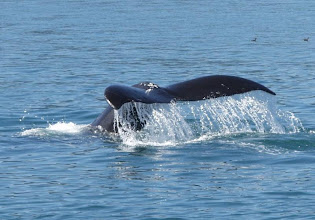 Photo: Whale Tail