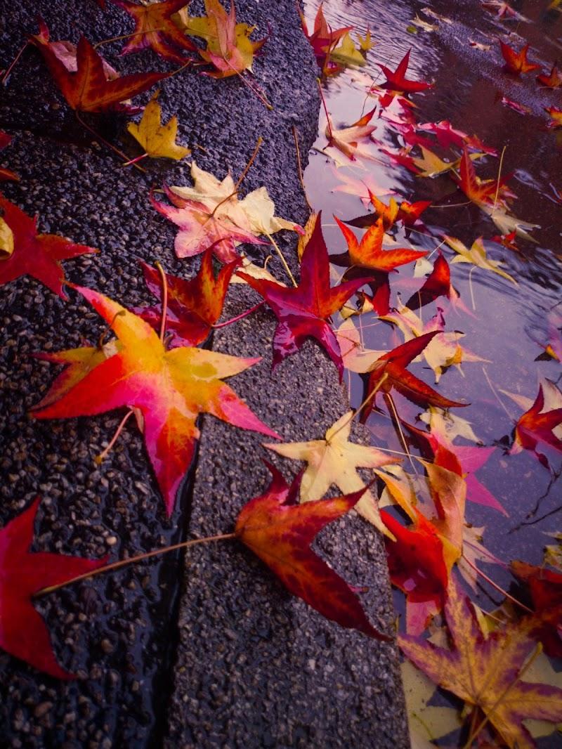 Autumn Rain di Mmanzoni