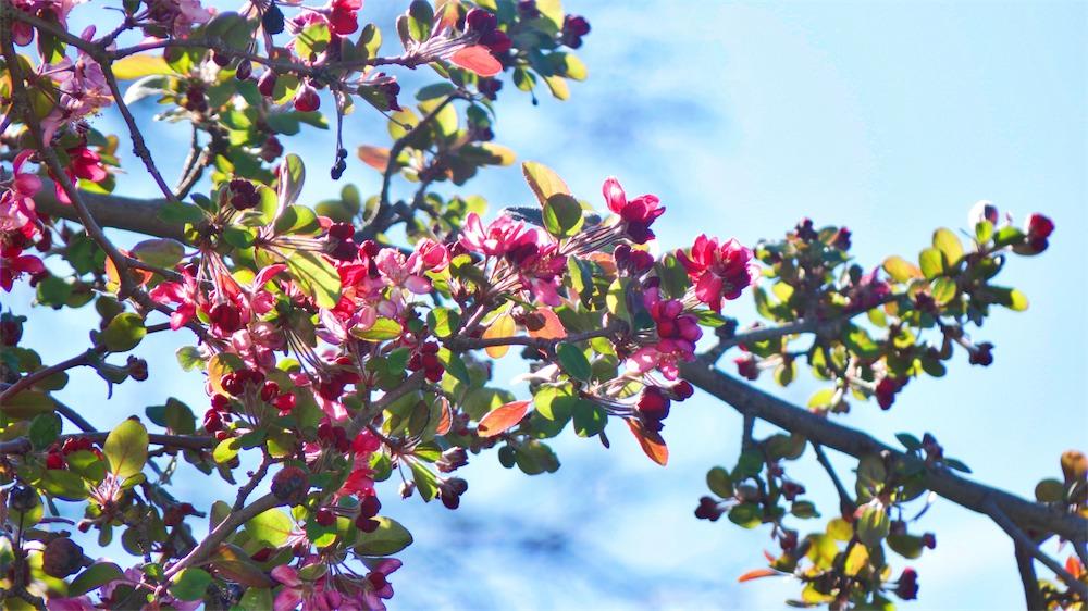 Cherry Tree 2.jpg