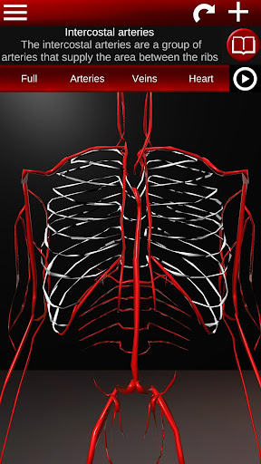 Circulatory System in 3D (Anatomy) 1.58 screenshots 3